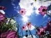Beautiful flowers under the sky wallpaper